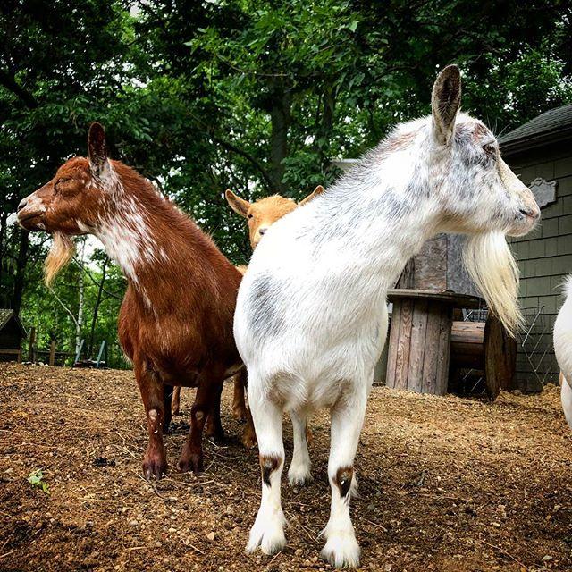 #goatgram