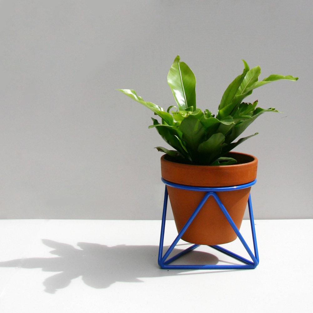 Mini Tri_Berlin Blue_Plant.jpg