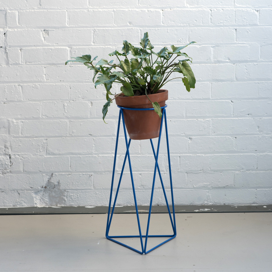 High Tri_Ring_Blue_Plant.jpg