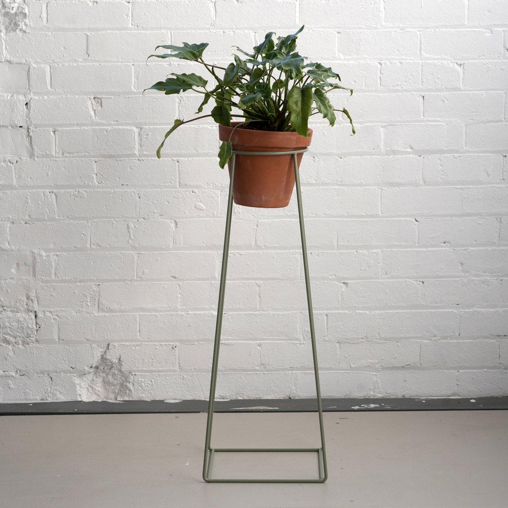 Basic_Ring_Euclapytus_Plant.jpg