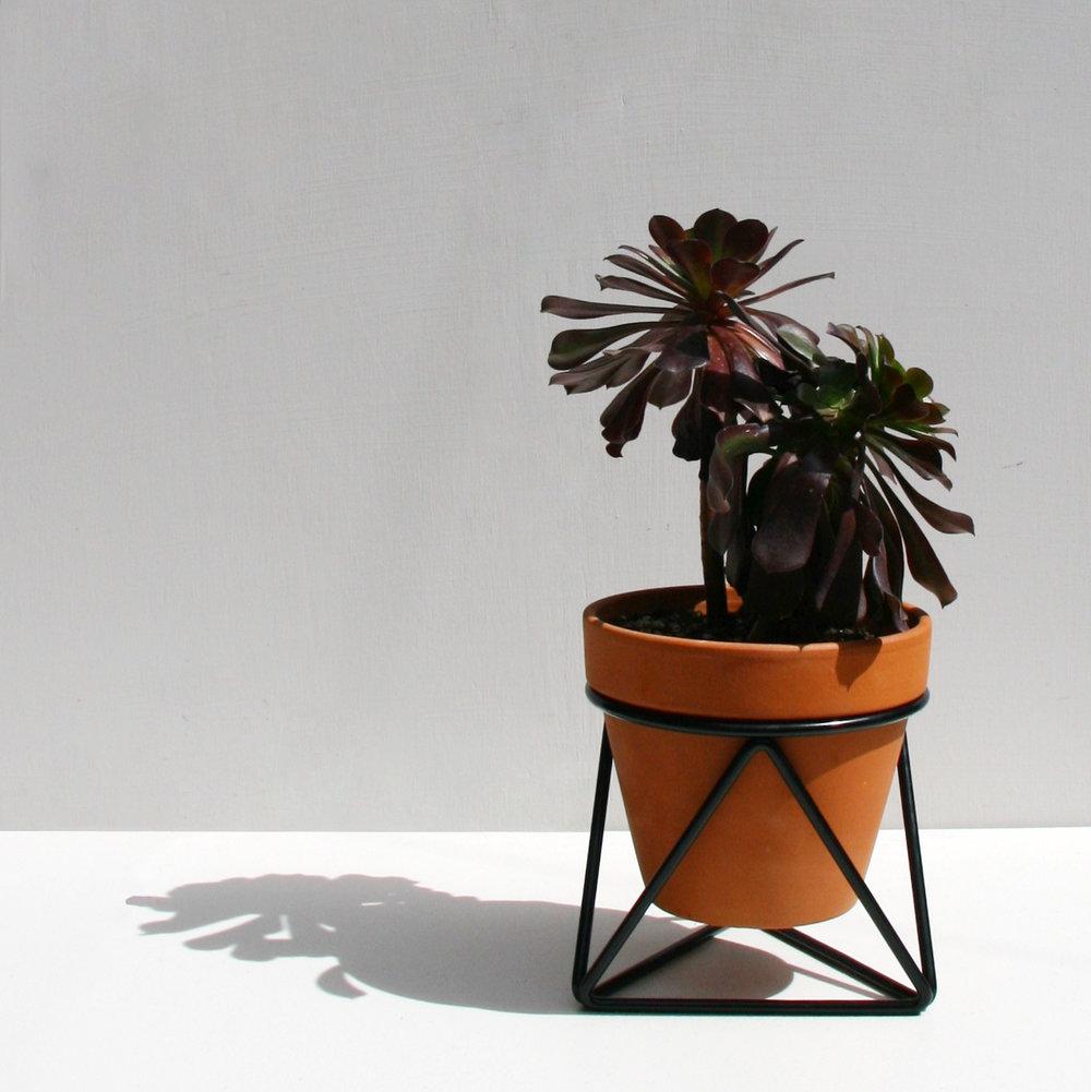 Mini Tri_Black_Plant.jpg