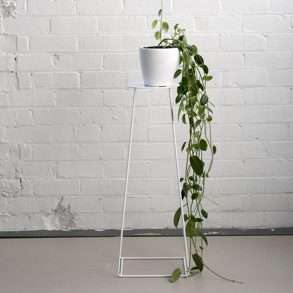 Basic_Plate_White_Plant.jpg