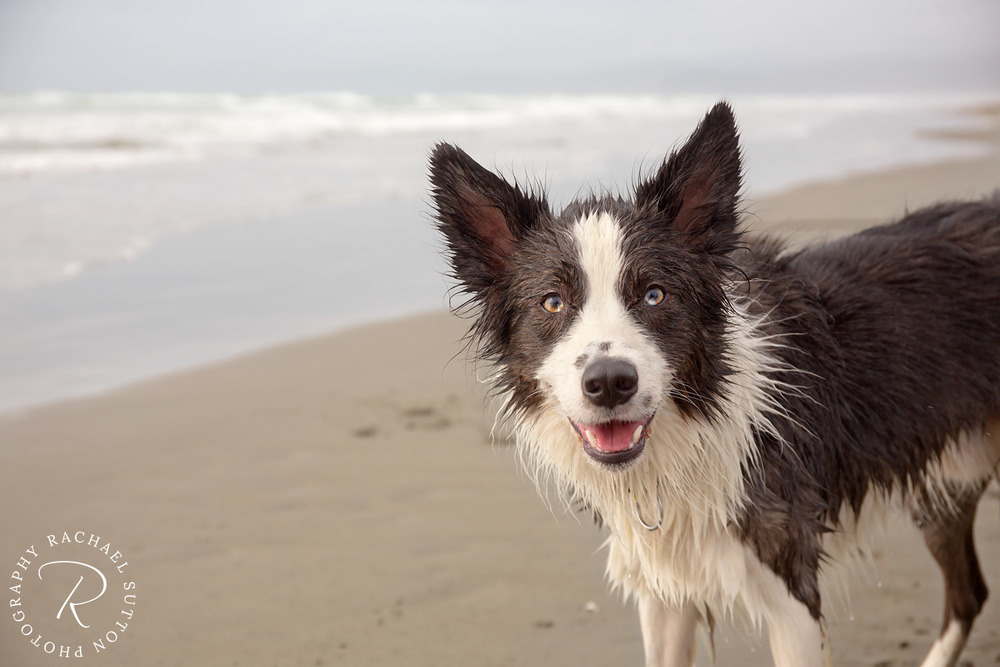 wet dog on beach, pet photo