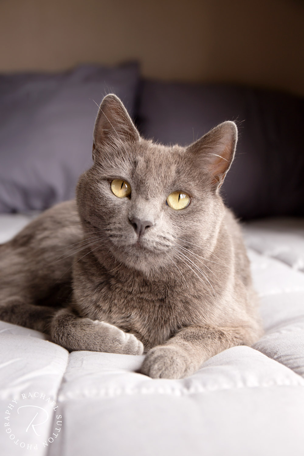 Cat Photo, Cat, sitting on bed with bright yellow eyes. Rotorua New Zealand