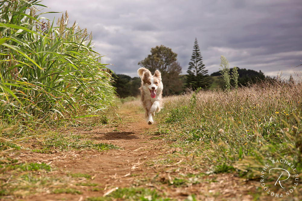 running dog, pet photography