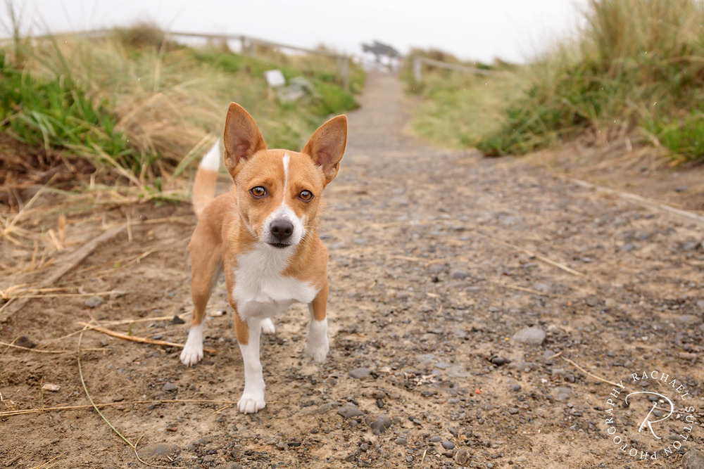 Dog photography, dog on path to beach