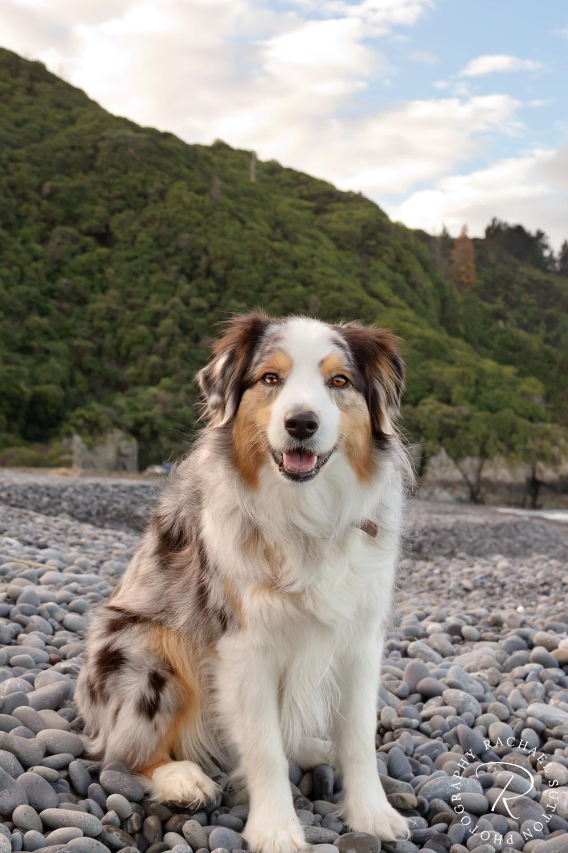 Rarangi Beach Marlborough, dog walking adventures I Rachael Sutton Photography, New Zealand pet photographer