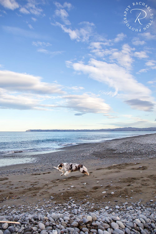 Rarangi Beach, Blenheim dog walking adventures, Rachael Sutton Photography, New Zealand pet photography
