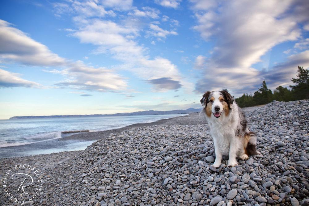 Rarangi Beach, Marlborough, Dog walk, New Zealand pet photographer