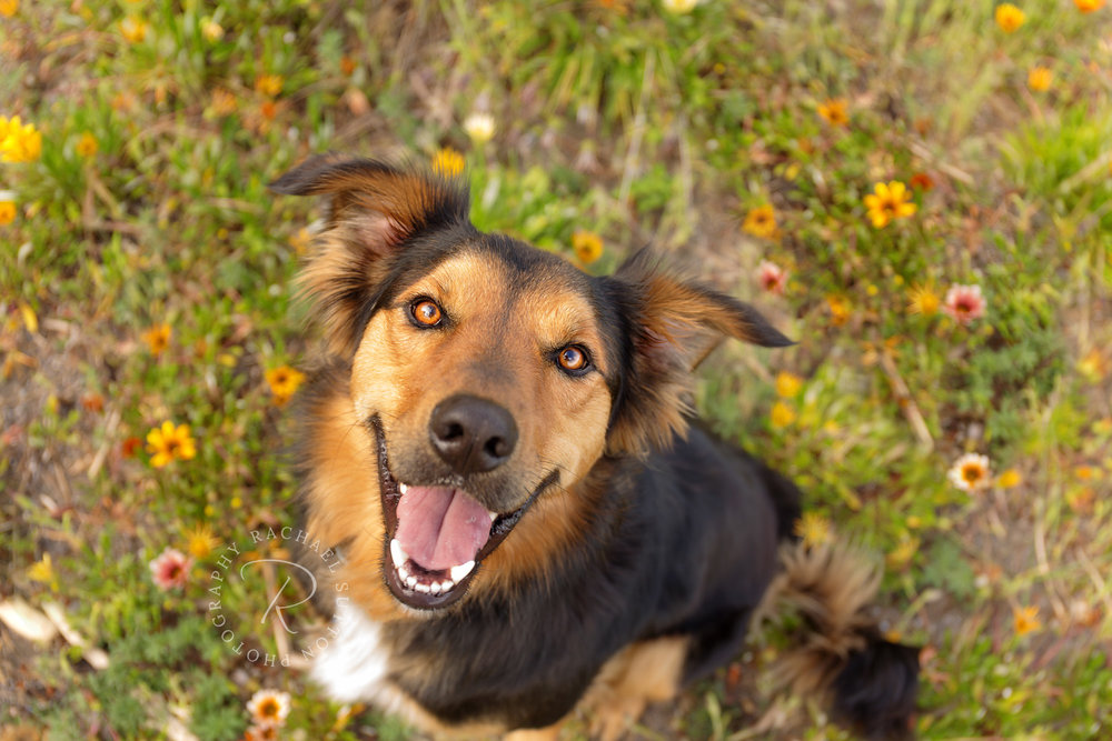 happydogphotography
