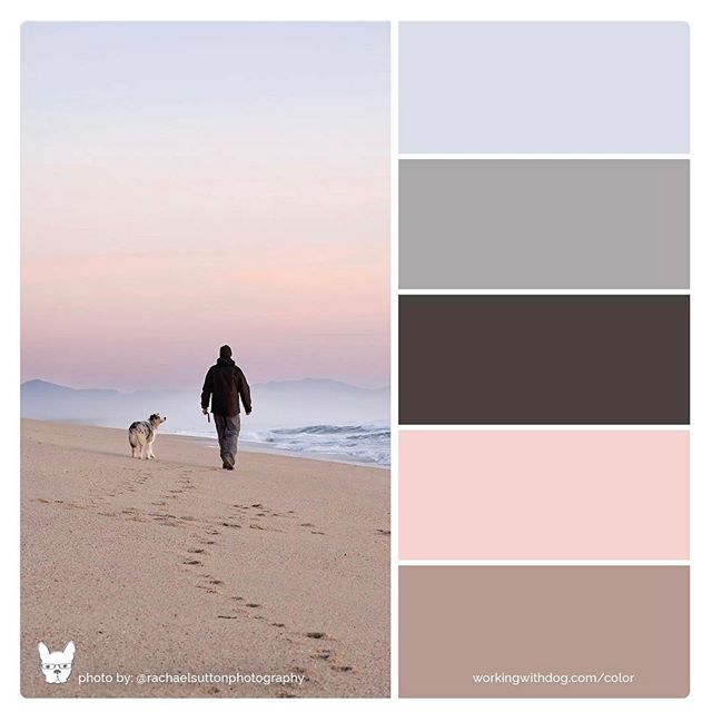 Start the Friday afternoon off right with some fun with colour and of course a dog! 🐶Thanks to @workingwithdog I am in love with these custom dog colour palettes she has created 🙌🏻 All of the palettes I have seen shared so far have been so gorgeous that the colour and dog lover 💛part of me made me do it - such a fun and great idea. What do you think?? #dogcolorpalette #dogbrand #funwithcolor . . . . #rachaelsuttonphotography  #colortheory #colourpop #petphotography #petphotographer #dogbusiness #petbusiness #brillianteveryday #dogsofnz #workingwithdog #sunsetsky #milliondollardogbrand #australianshepherd #bluemerle #aussiesofinstagram