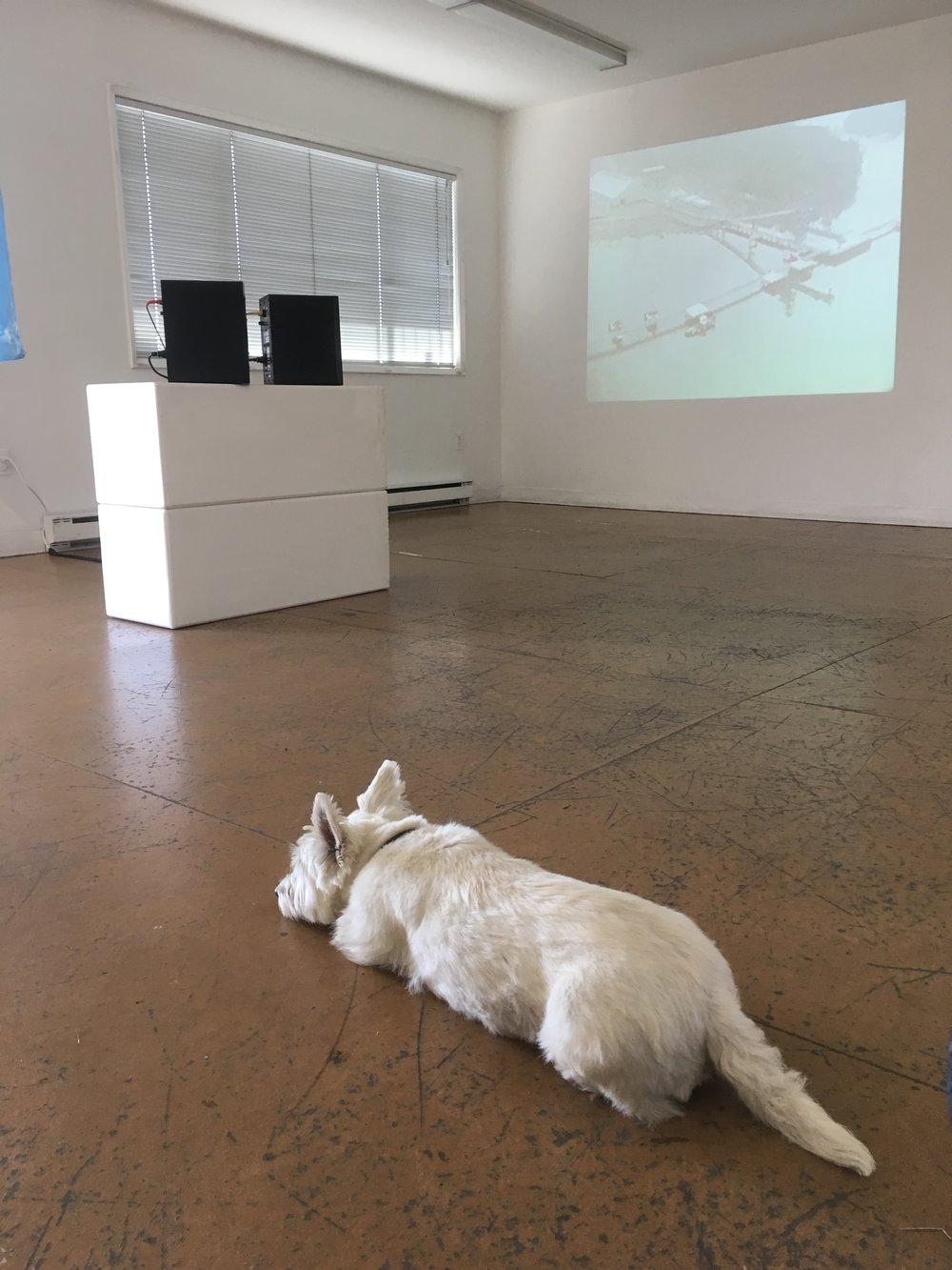 Enzo the westie is the best gallery sitter!