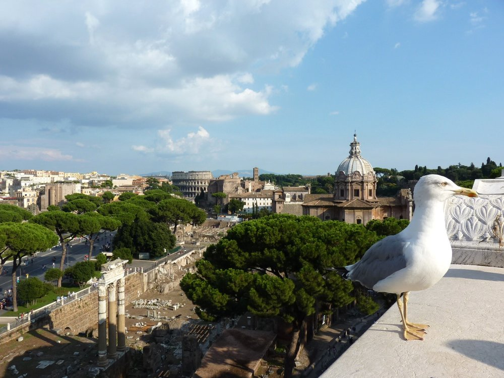 Looking-over-Rome.jpg