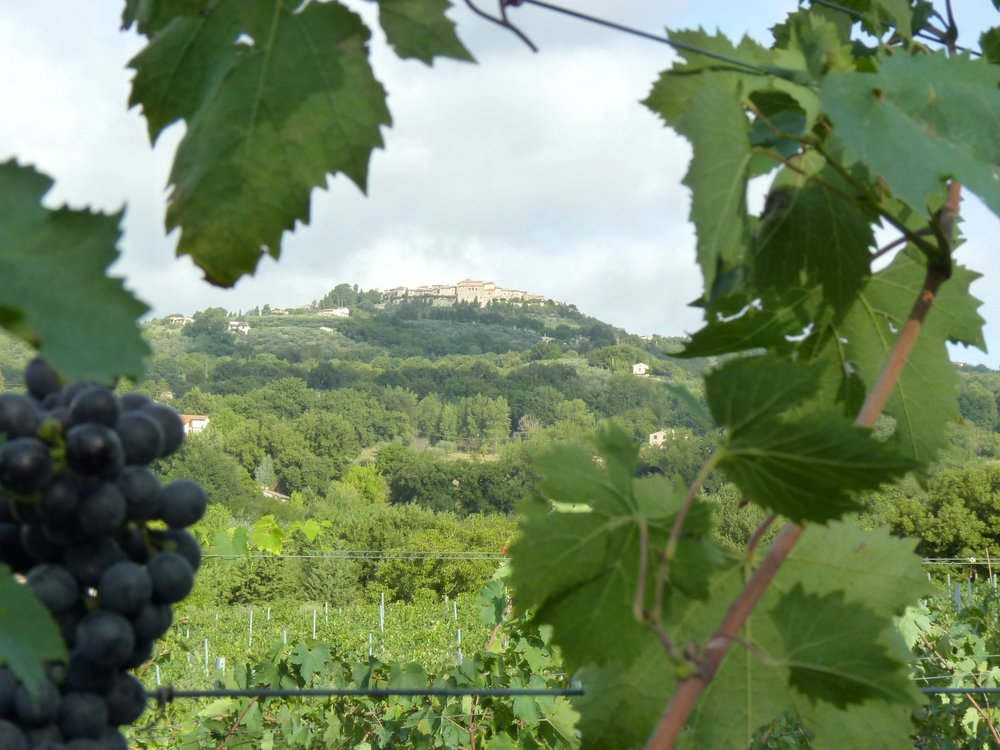 Montecastello-from-our-grapes.jpg
