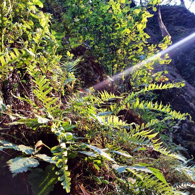 God light shining in the Gorge