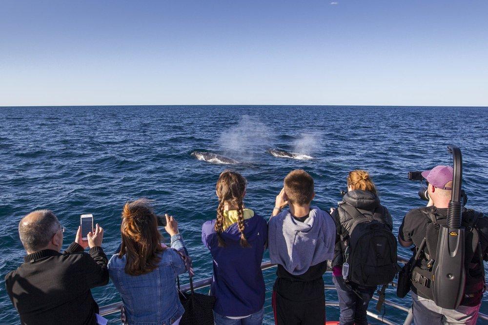 WhaleWatching_20170705_Sydney_DestinationNSW_DK--21.jpg
