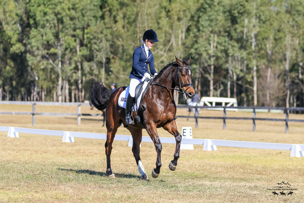 CEI Dressage May 2018