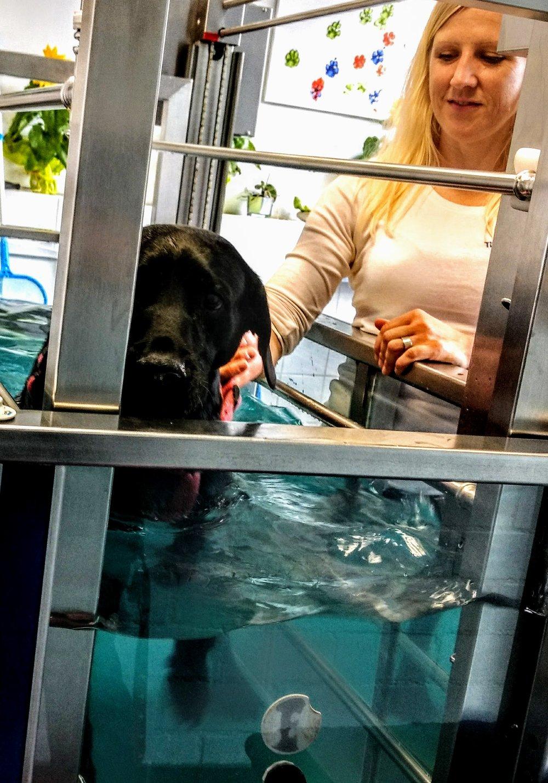 Nina Underwater treadmill.jpg