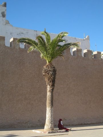 Man by palm tree outside medina walls
