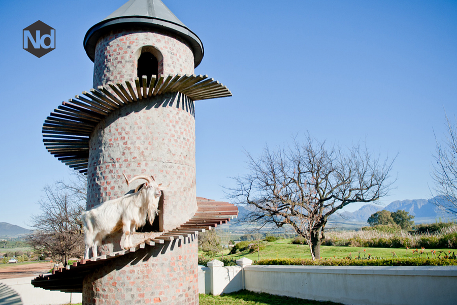 Nicholas Daines - Farview Wine Estate