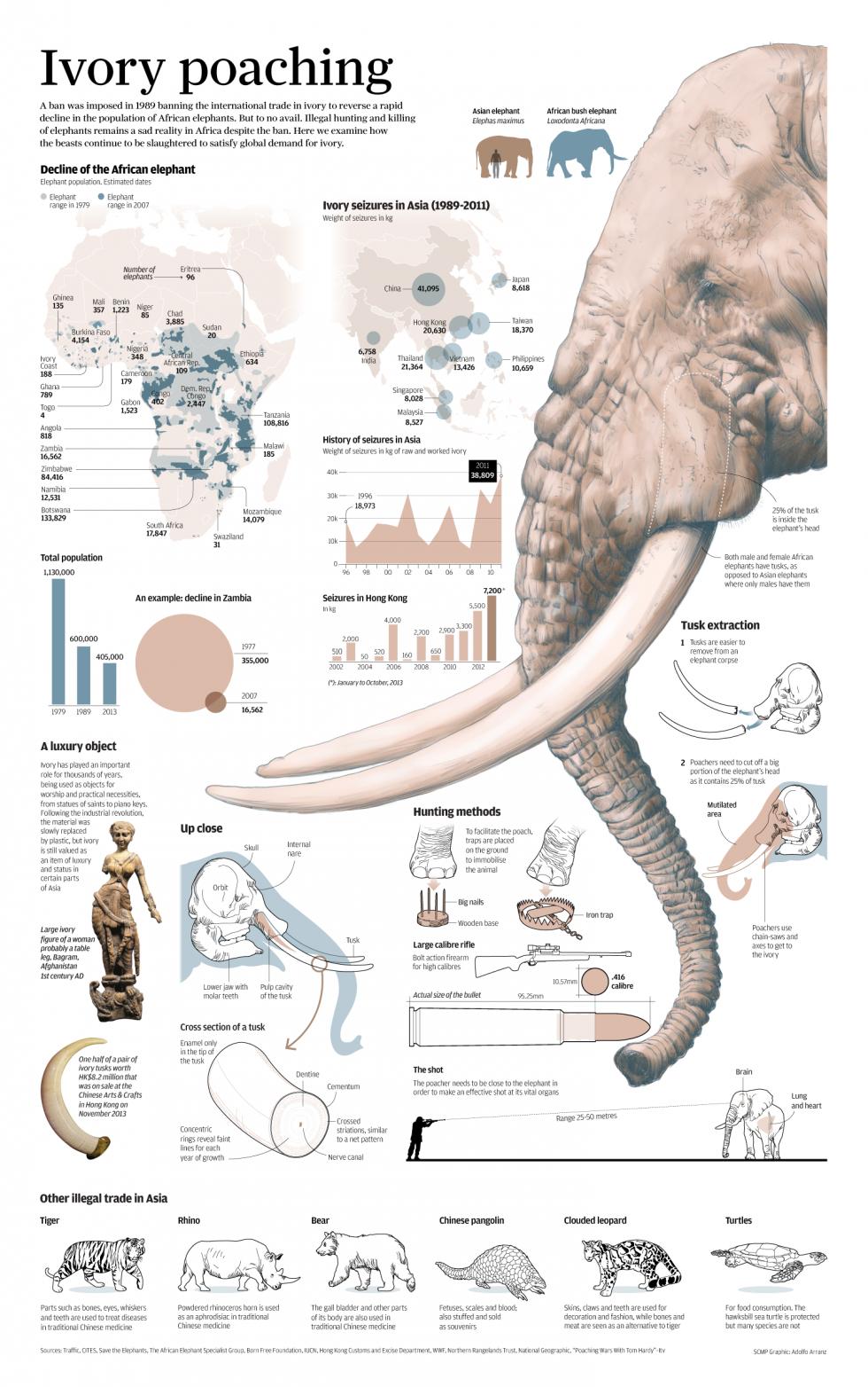 elephant-ivory-ok.png