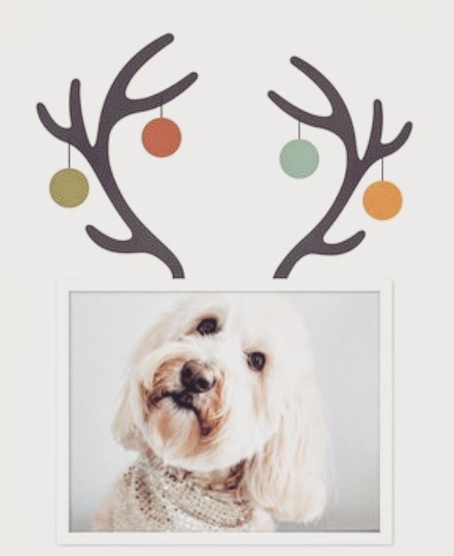 Dog Holiday Cards @minted 🎄🐾