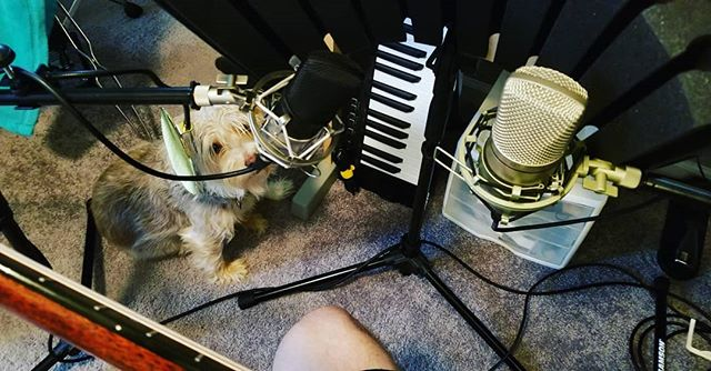 """The sound of the collar as I scratch my face should be a nice accompaniment to this track""  #guitar #recording #Guitar #Guitarist #Instamusic #Instaguitar #jackrussell #jackrussellterrier #dogsofinstagram #dogstagram"