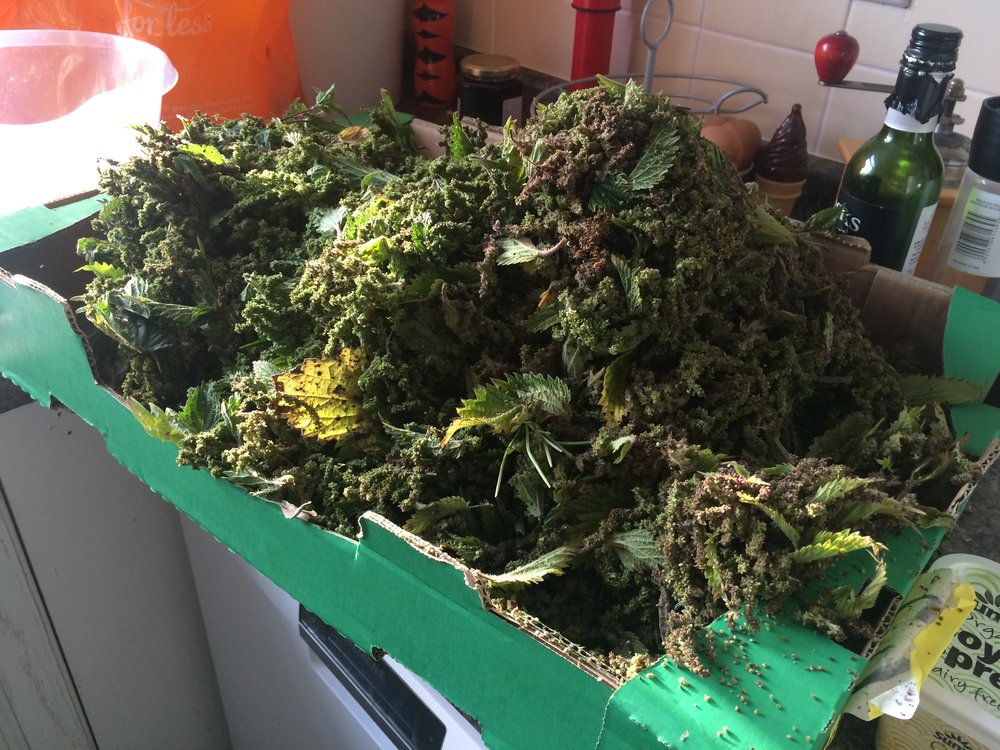A Mountain of Nettle Seeds