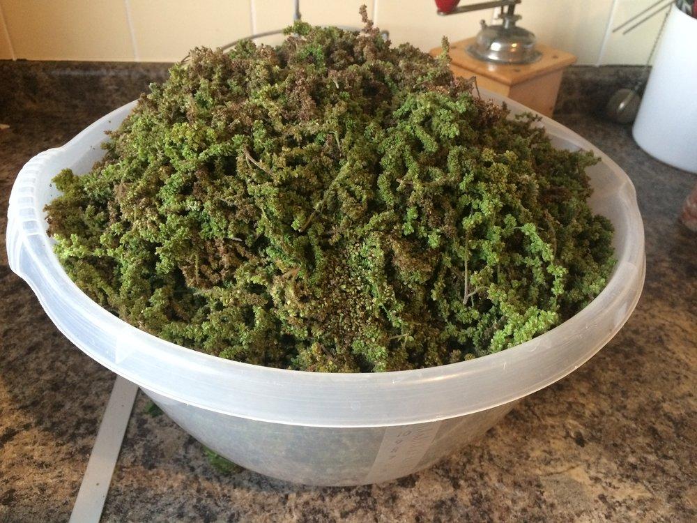 A bowl full of nettle seeds
