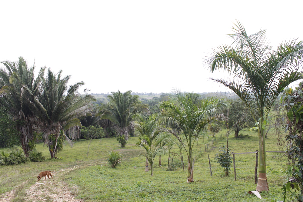 Royal palms,  COHUNES, & cherrIES captivate your view here at heaven valley