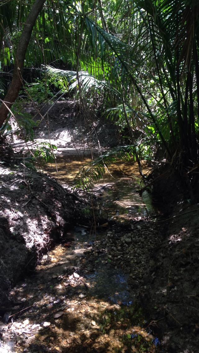 TROP creek.JPG