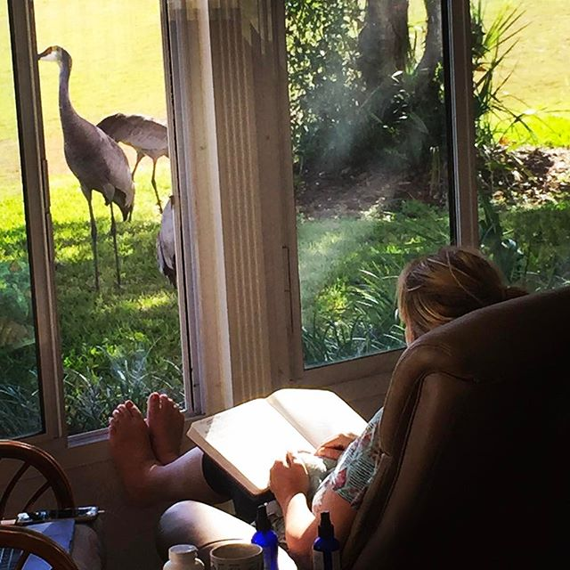 Meditate and the birds come. Very blessed. #sandhillcrane #healinganswers