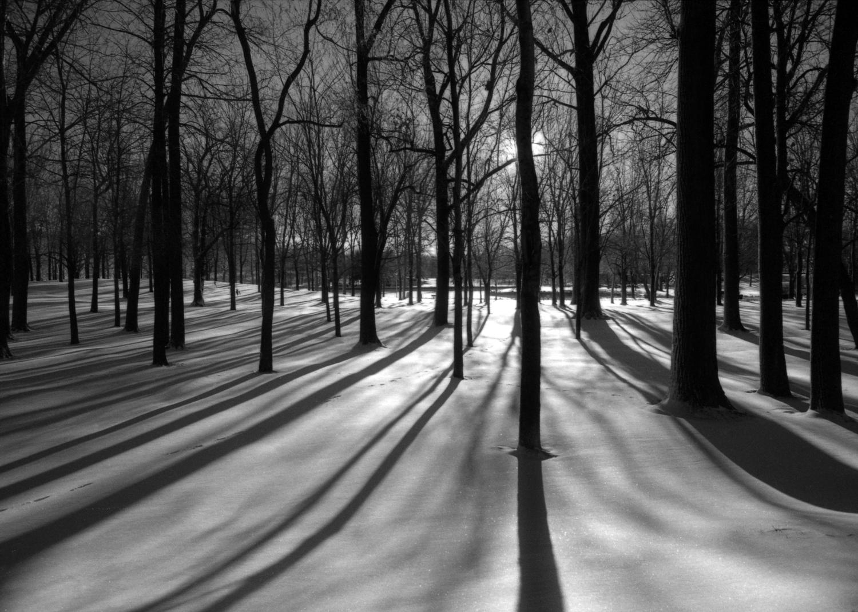 HIVER 21 DEC 2018  ~  19 MARS 2019 Winter+trees+%231+18x24