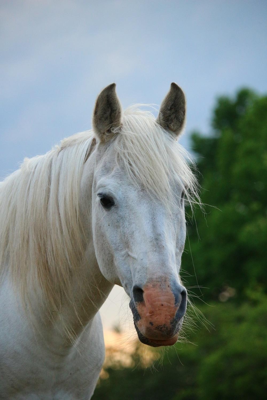 horse in barn peeking.jpg