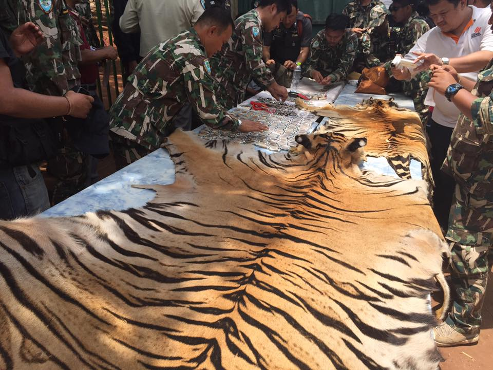 Black market tiger parts seized from a truck attempting to leave Tiger Temple grounds.