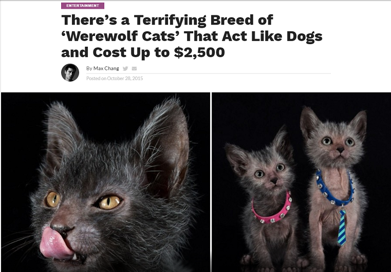 A typical news article about Lykoi cats goes for the shock value immediately.