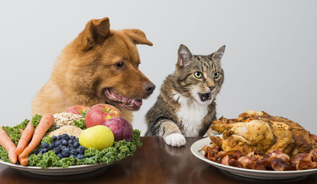 Image result for animals eating thanksgiving
