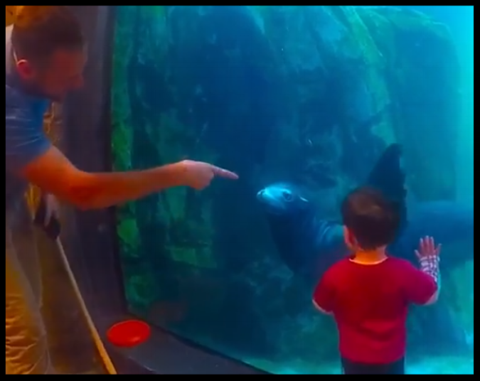 A California sea lion is cued to wave at a small child at the Turtle Back Zoo's underwater interaction window.   Photo Credit: Turtle Back Zoo