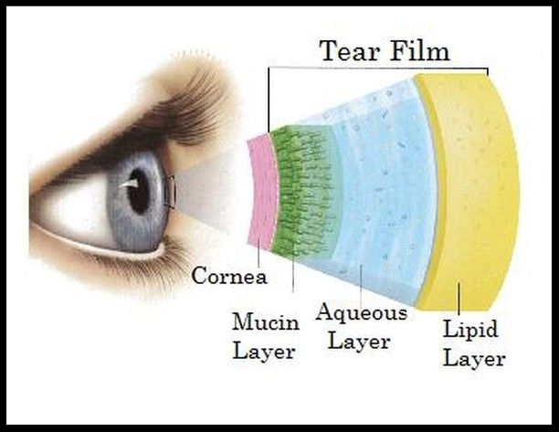 A diagram of tear film composition in the human eye.  Photo Credit:  Refresh