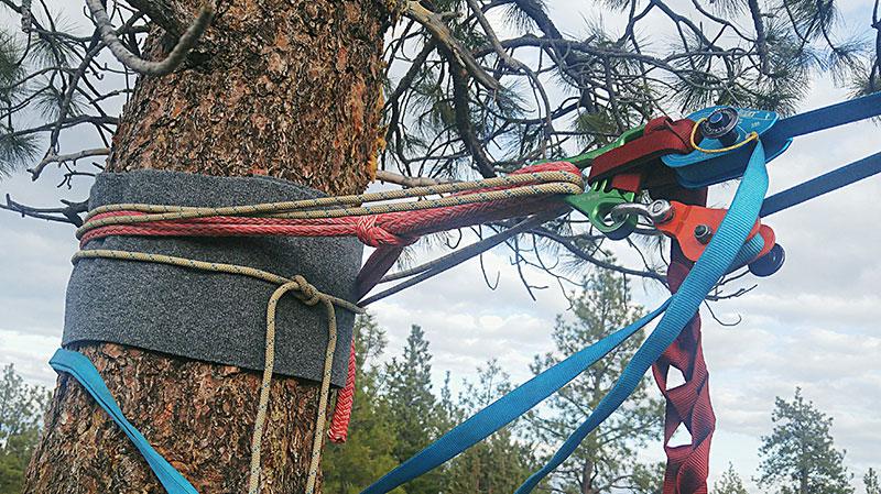 slackline tree padding