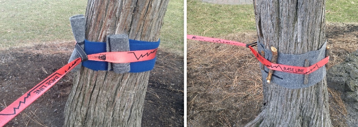 A great way to pad trees! Wrap trunk in carpet or padding and place spacers (small branches or sticks) around webbing to eliminate friction points and cambium pressure.