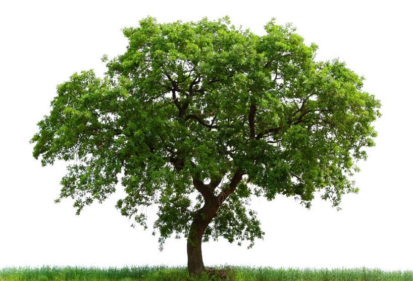 Healthy tree, not so healthy tree?