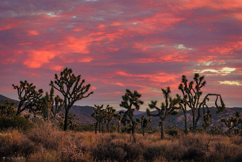 Red Sky Over Joshua Tree