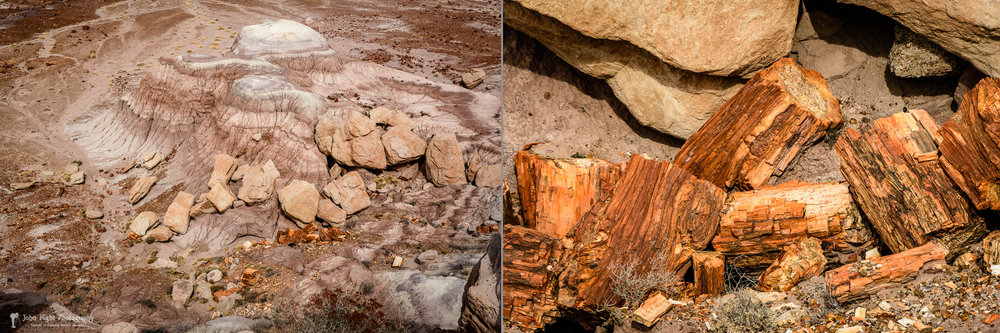 Jasper Forest and Petrified Logs