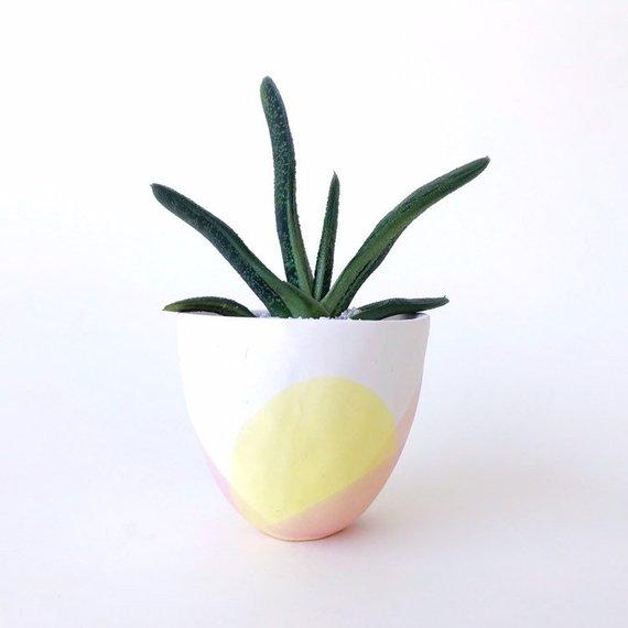 Mini Cactus ($20-70)