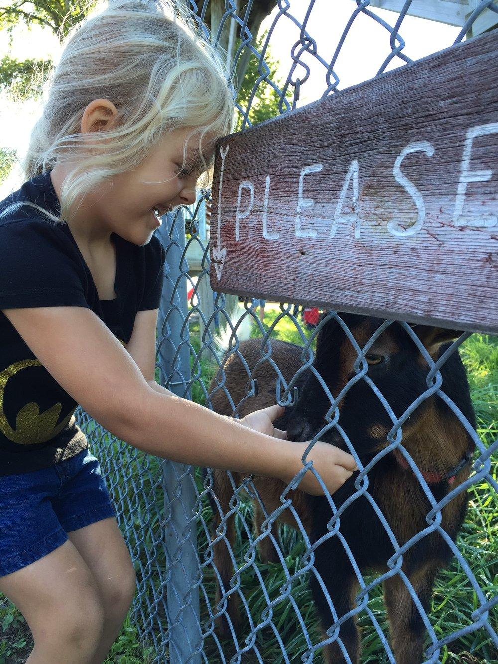 friskes-farm-market-petting-zoo.jpg