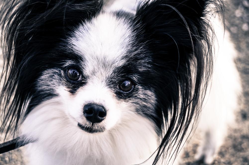 12 Years of Canine Wisdom
