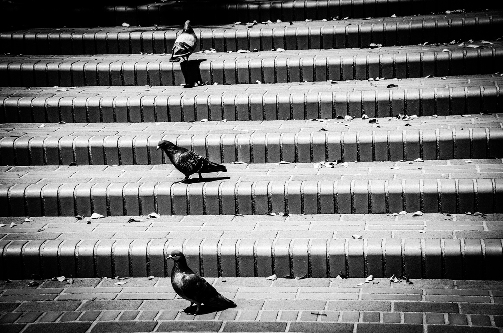 Stacked Pigeons