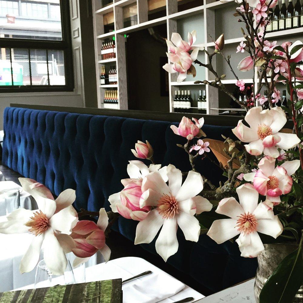 tulip magnolia.JPG