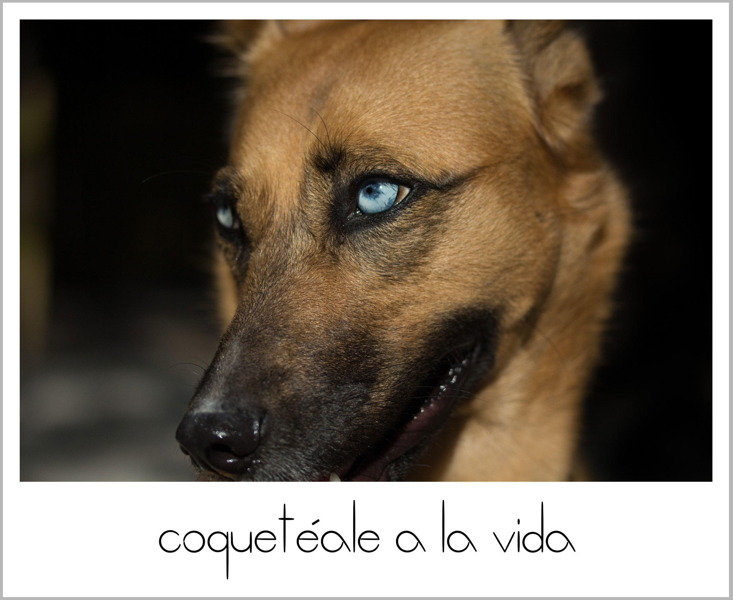 CoquetealeAlaVida